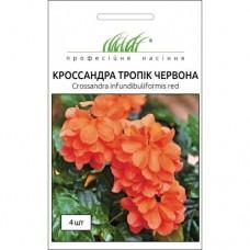 Кроссандра Тропик красная 4 шт.
