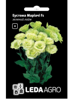 Эустома  Мариачи  F1 зелёный  лайм  5 шт.